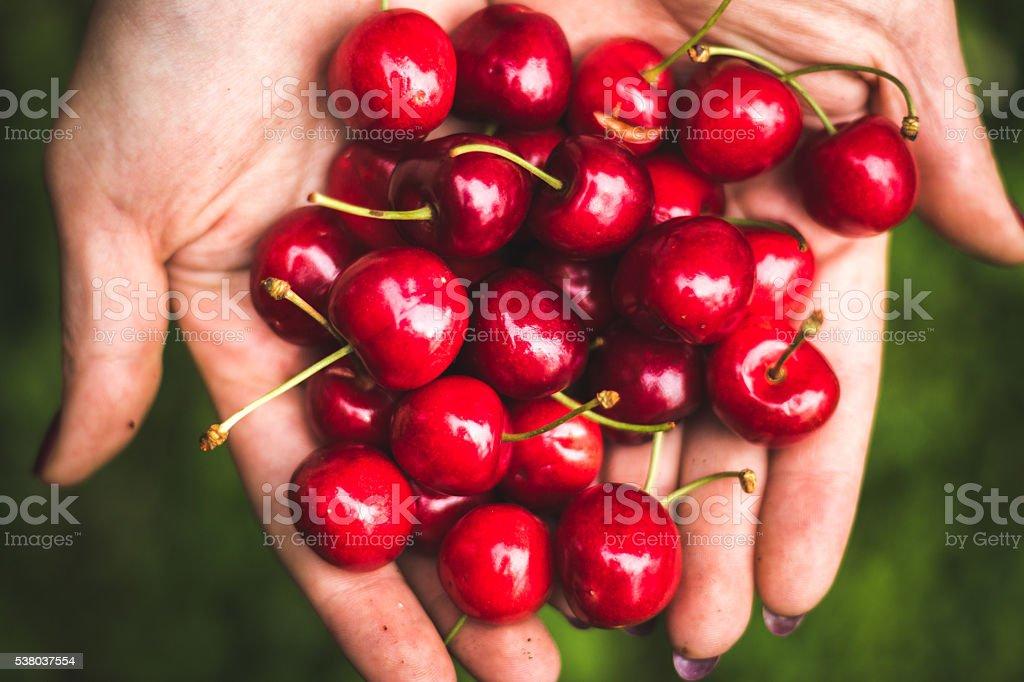 Pile of fresh cherries stock photo