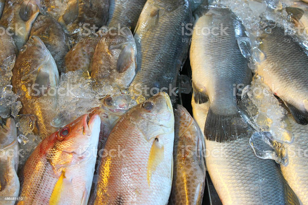 pile of fresh fishes in seafood market stock photo