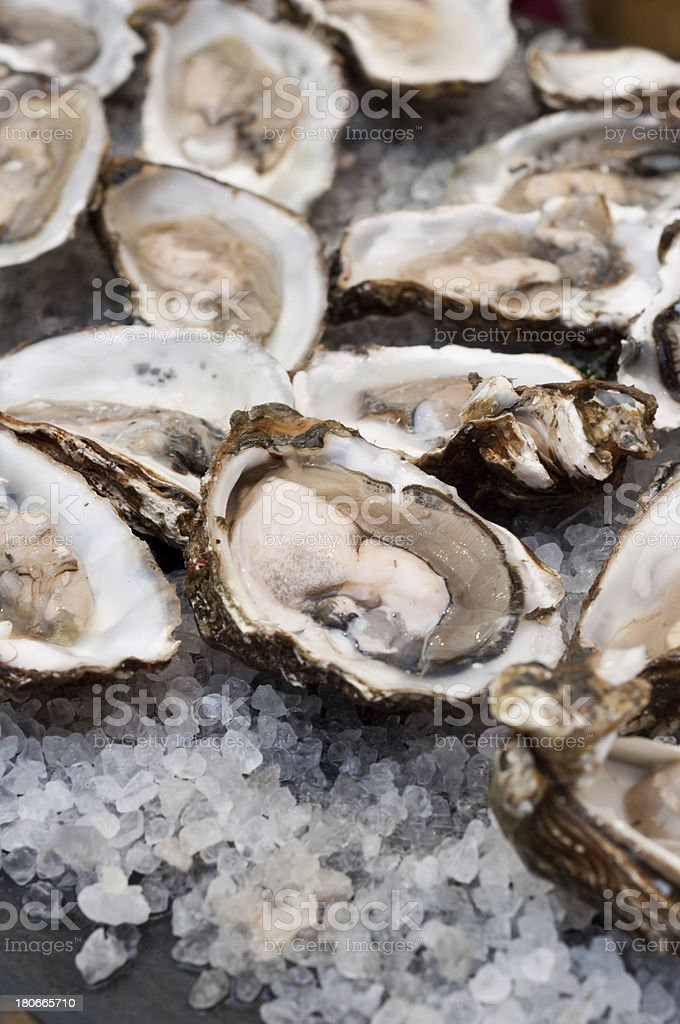 A pile of fresh oysters with ice stock photo