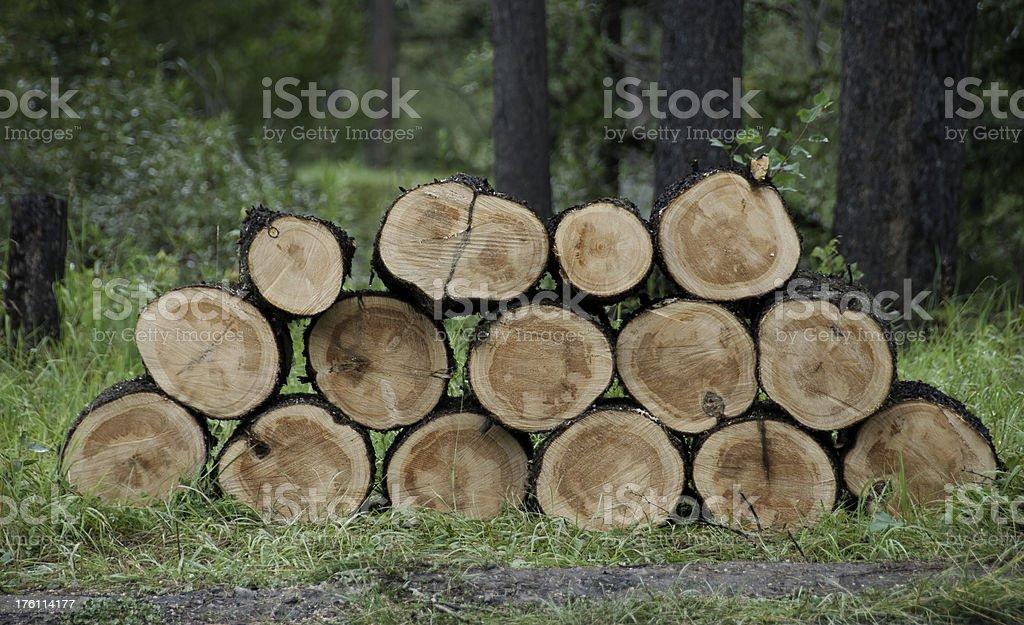Pile Of Freshly Cut Logs royalty-free stock photo