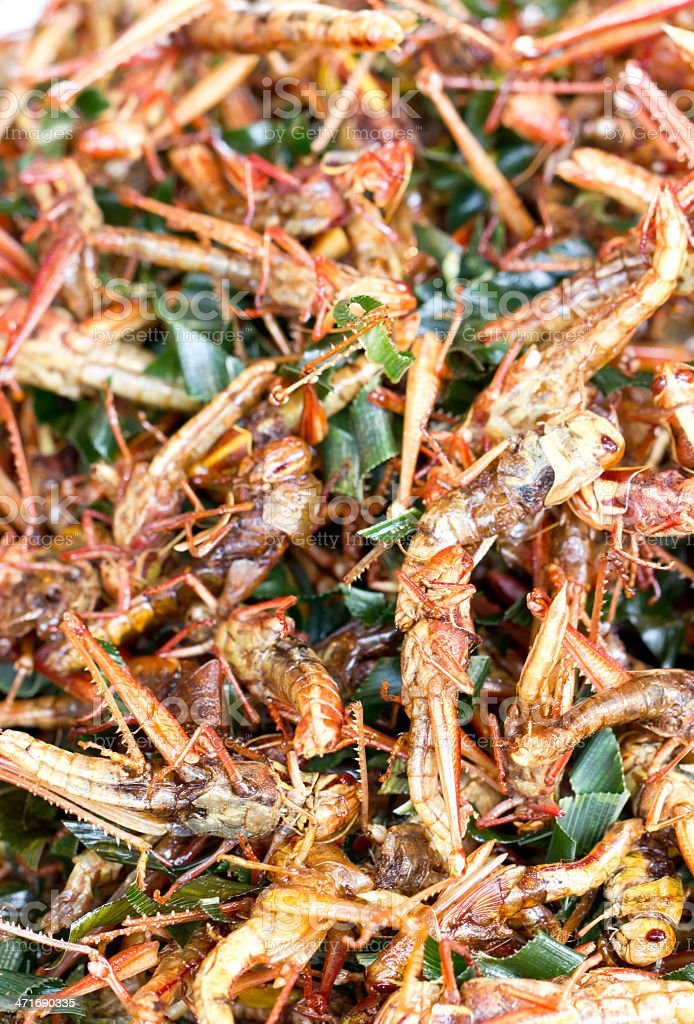 Pile of fried grasshopper. royalty-free stock photo