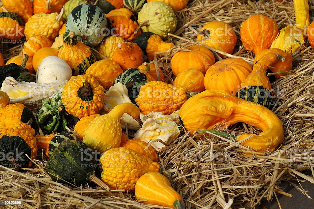 pile of gourds stock photo