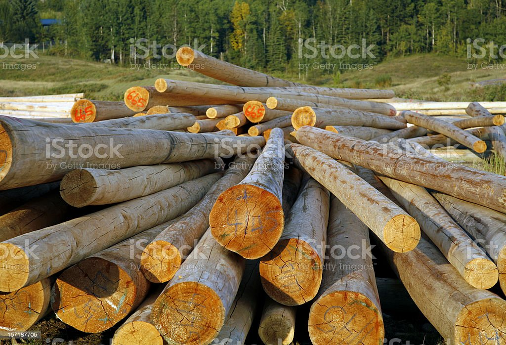Pile of Graded and Numbered Debarked Logs royalty-free stock photo