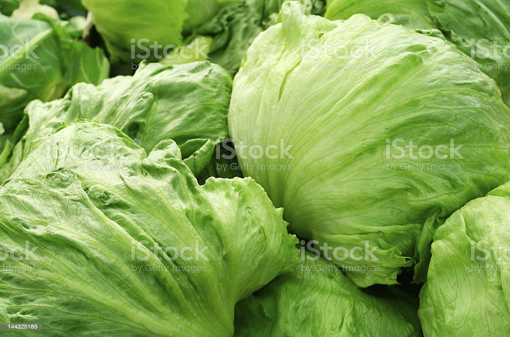 Pile of green, Iceberg lettuce stock photo