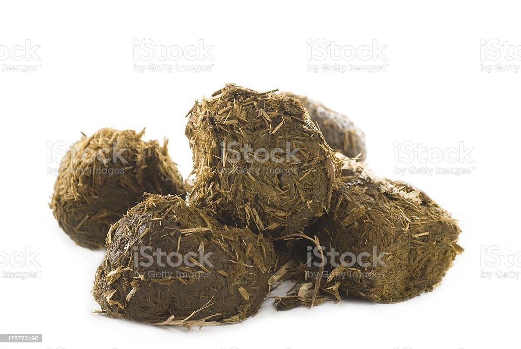 Pile of hay filled horse poop on a white background stock photo