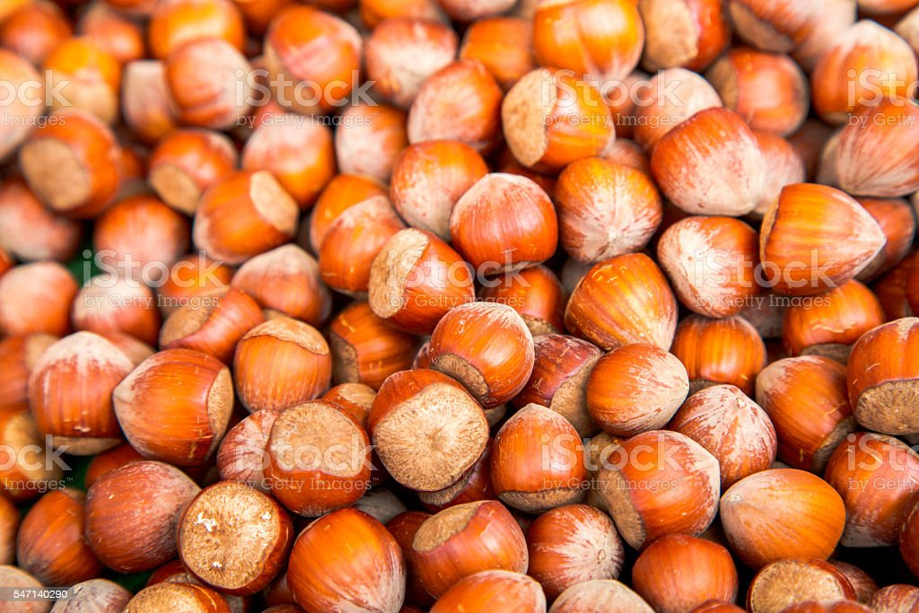 Pile of hazelnut in their shells stock photo