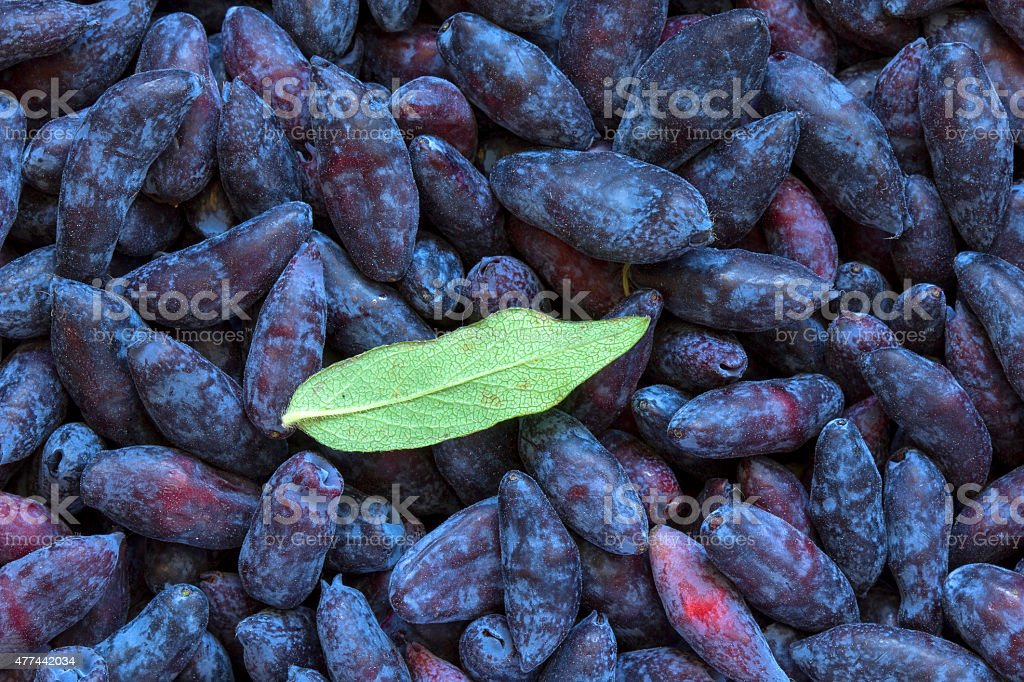 Pile of honeysuckle berries stock photo