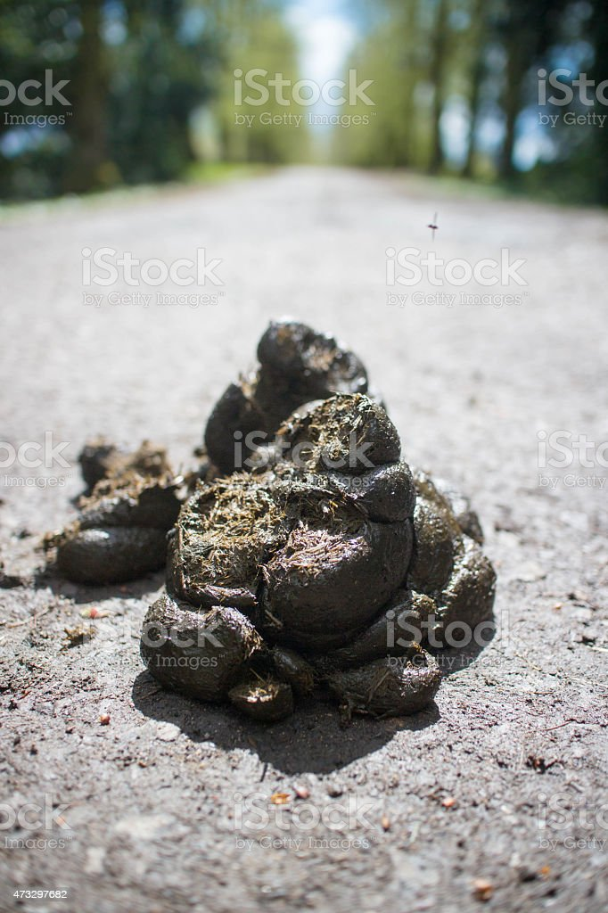 Pile of horse droppings on a park road stock photo