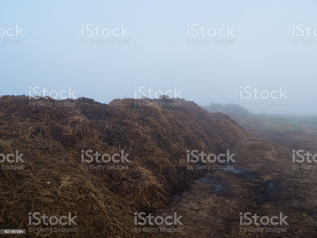 Pile of horse manure stock photo