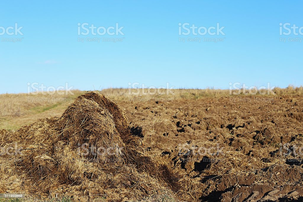 pile of horse shit royalty-free stock photo