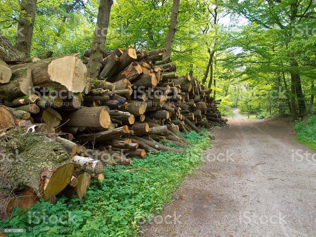 Pile of lumber stock photo