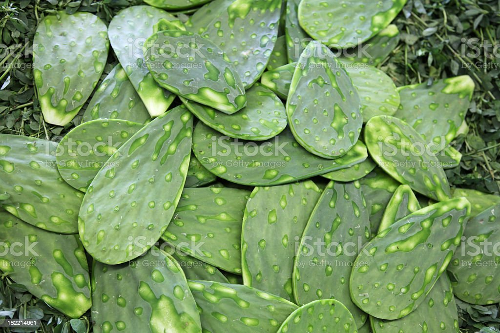 Pile of Nopal leaves with spines removed stock photo