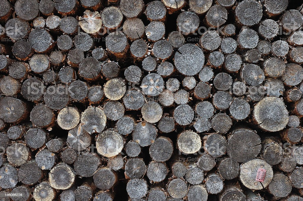 Pile of old wood logs stock photo