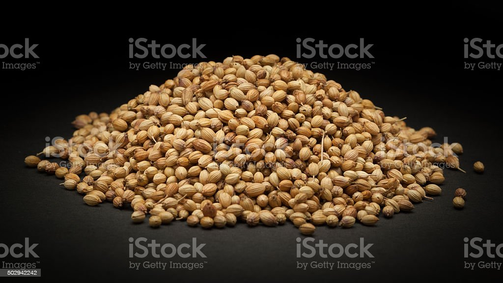 Pile of Organic Dried coriander seeds (Coriandrum sativum) stock photo