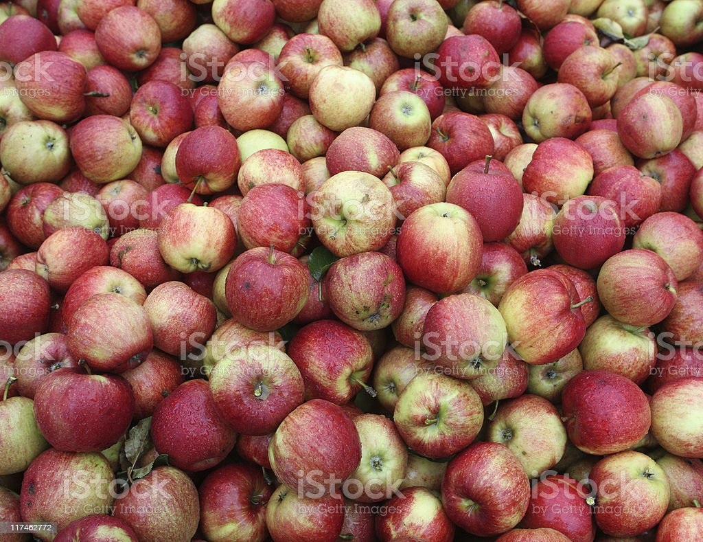 Pile of organic red apples royalty-free stock photo