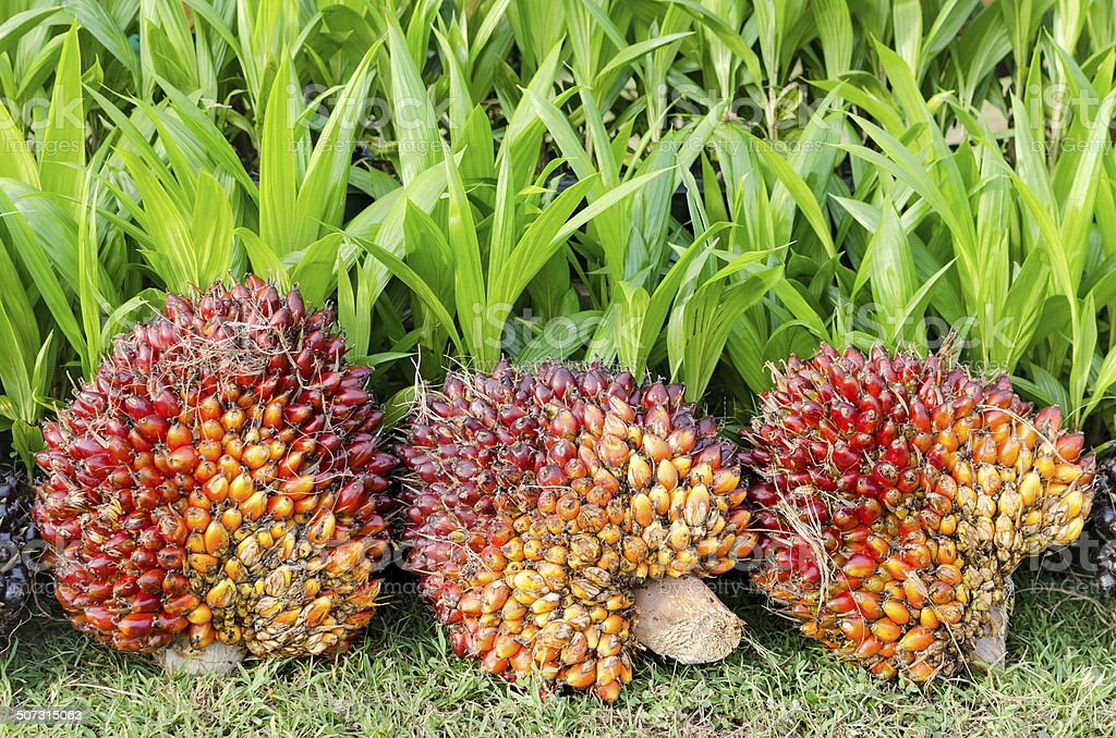Pile of palm oil stock photo