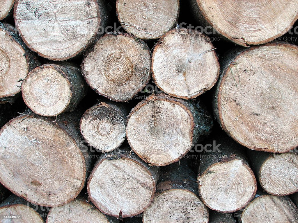 Pile of pine tree logs royalty-free stock photo
