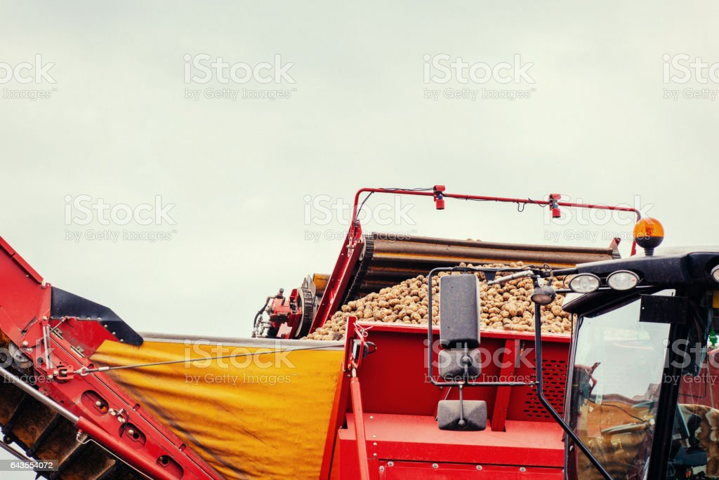 pile of potatoes on  trailer with vintage tractor stock photo