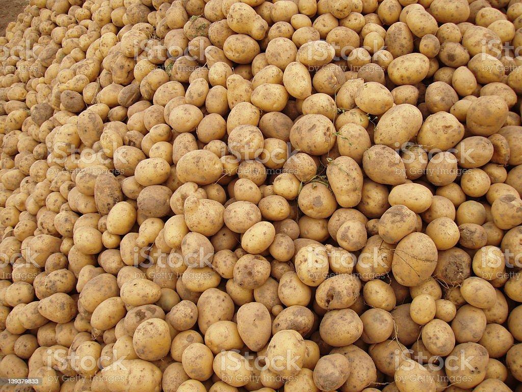Pile of potatoes royalty-free stock photo