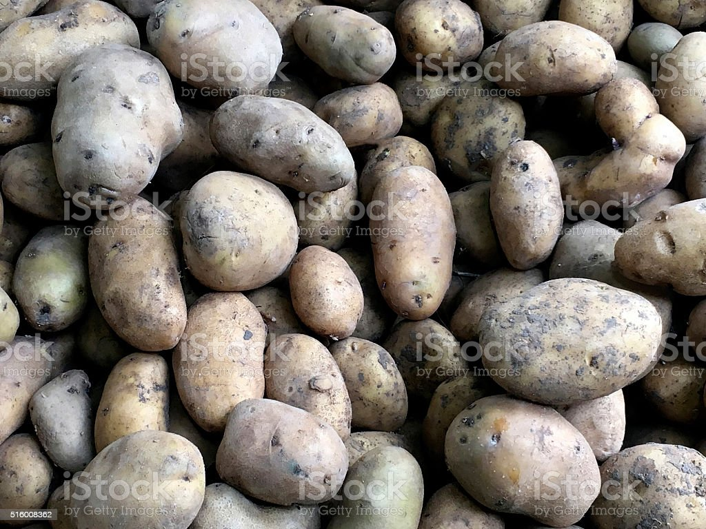 Pile of potatoes stock photo