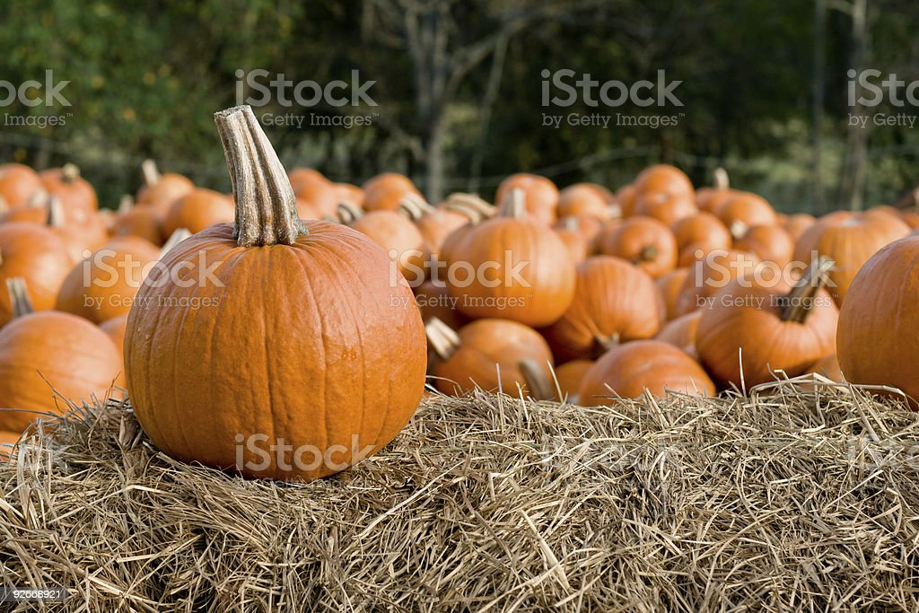 Pile of Pumpkins royalty-free stock photo