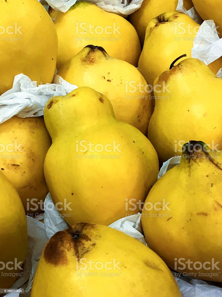 pile of Quinces stock photo