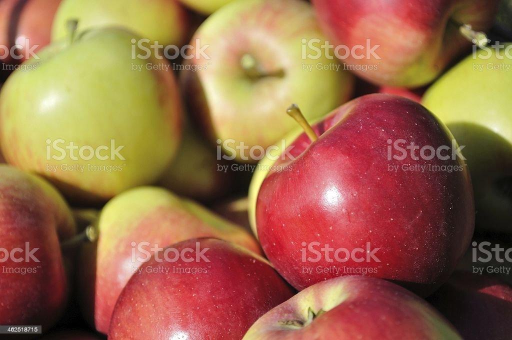 Sterty czerwony, zielony, żółty, dojrzałe jabłka zbiór zdjęć royalty-free