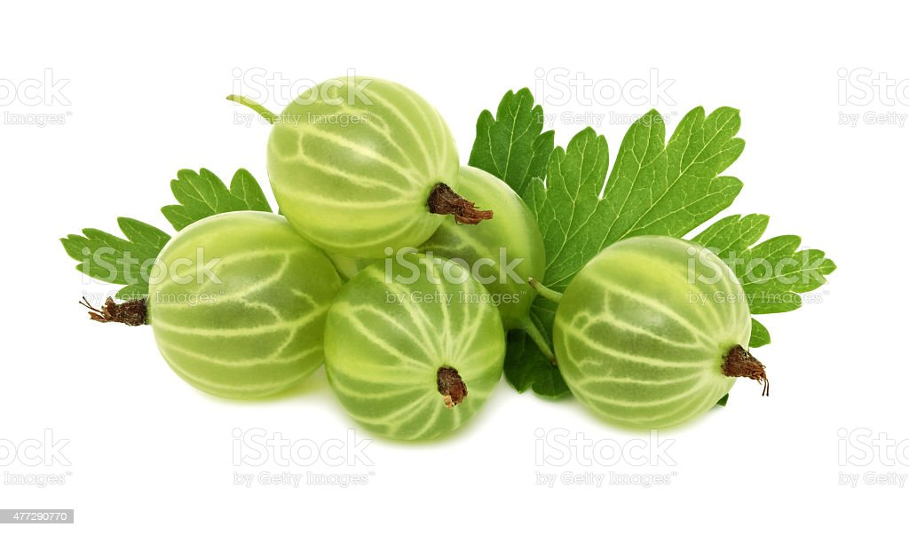 Pile of ripe green gooseberries with leaves (isolated) stock photo