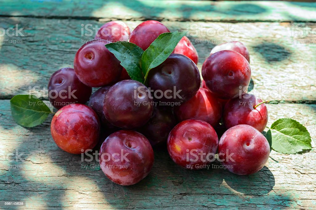 Pile of ripe plum cultivar 'Greengage' (alycha) stock photo