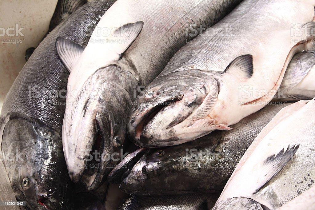 Pile of Salmon royalty-free stock photo