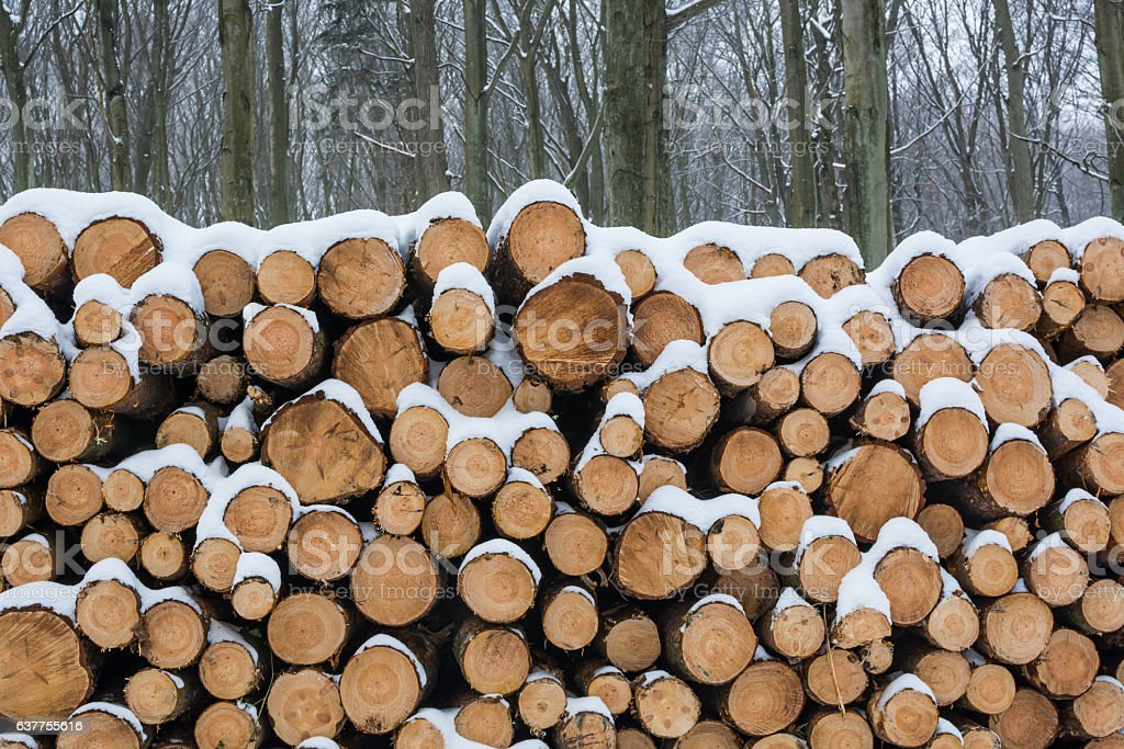Pile of sawed logs in the forest. stock photo