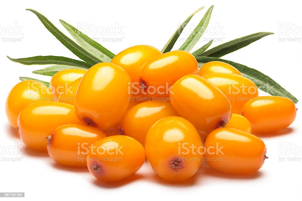 Pile of sea buckthorn berries with leaves, clipping paths stock photo