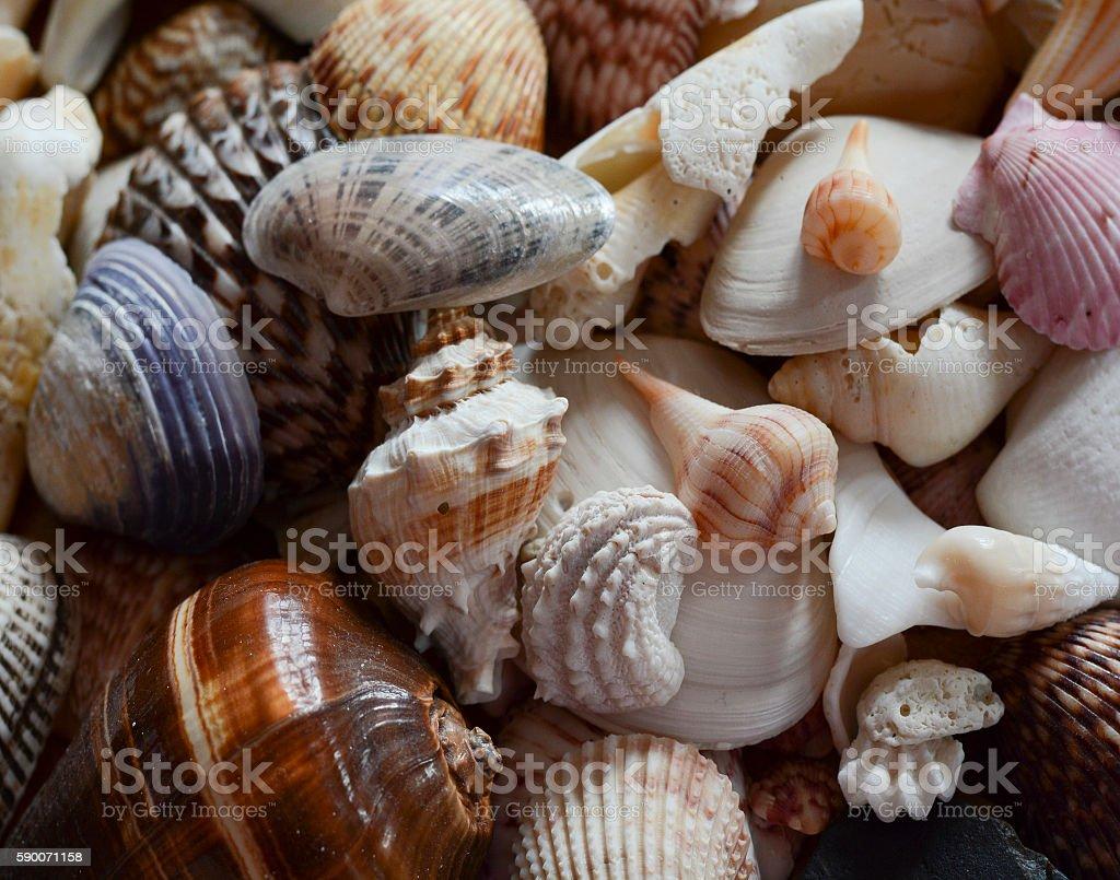Pile of Seashells stock photo