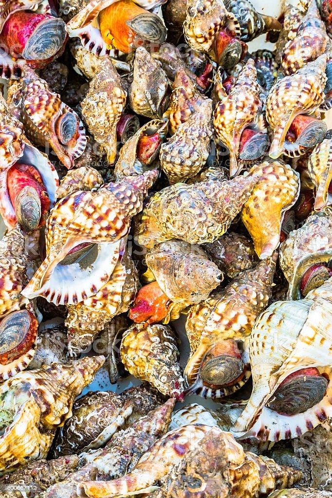 Pile of Shellfish stock photo