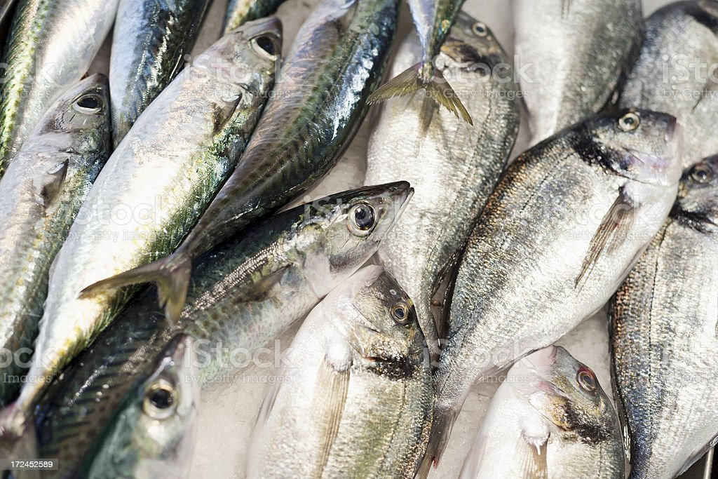 Pile of silver fish on ice royalty-free stock photo
