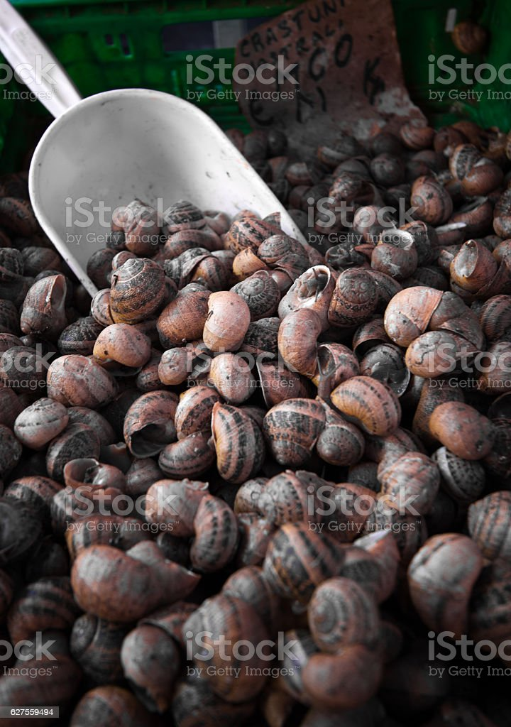 Pile of Snails with Serving Scoop (Full Frame Close-Up) stock photo