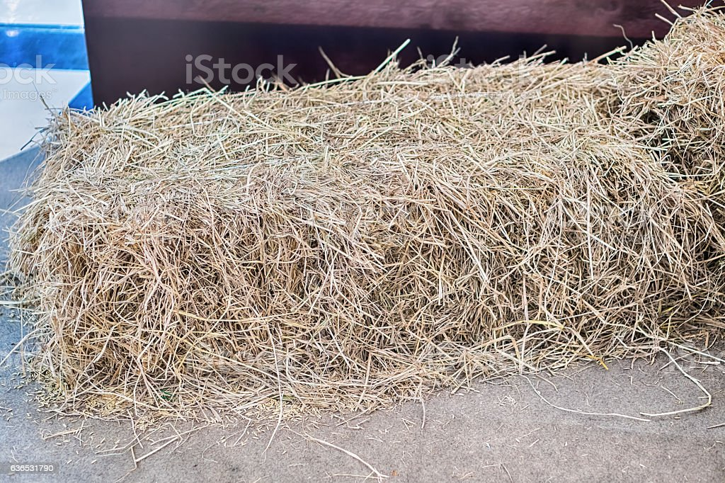 pile of straw on field, straw bales after harvest. stock photo
