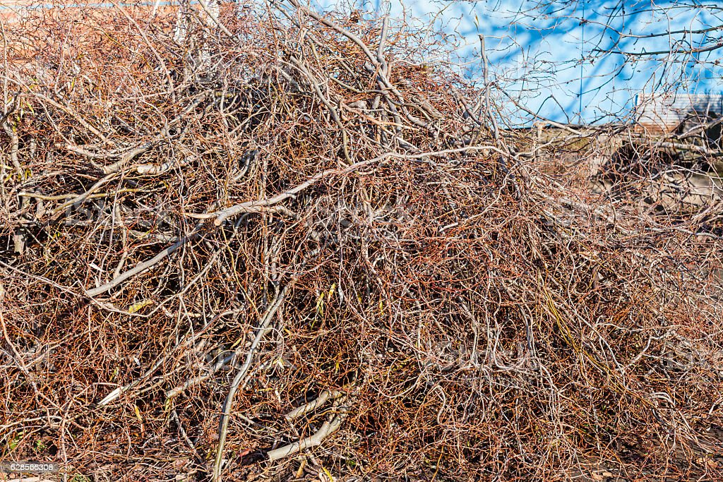 pile of trimmed branches of trees in backyard stock photo