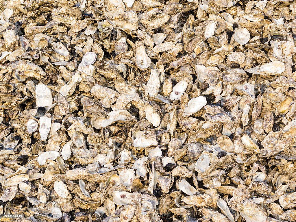 Pile of waste oysters shells on island Sado, Japan stock photo