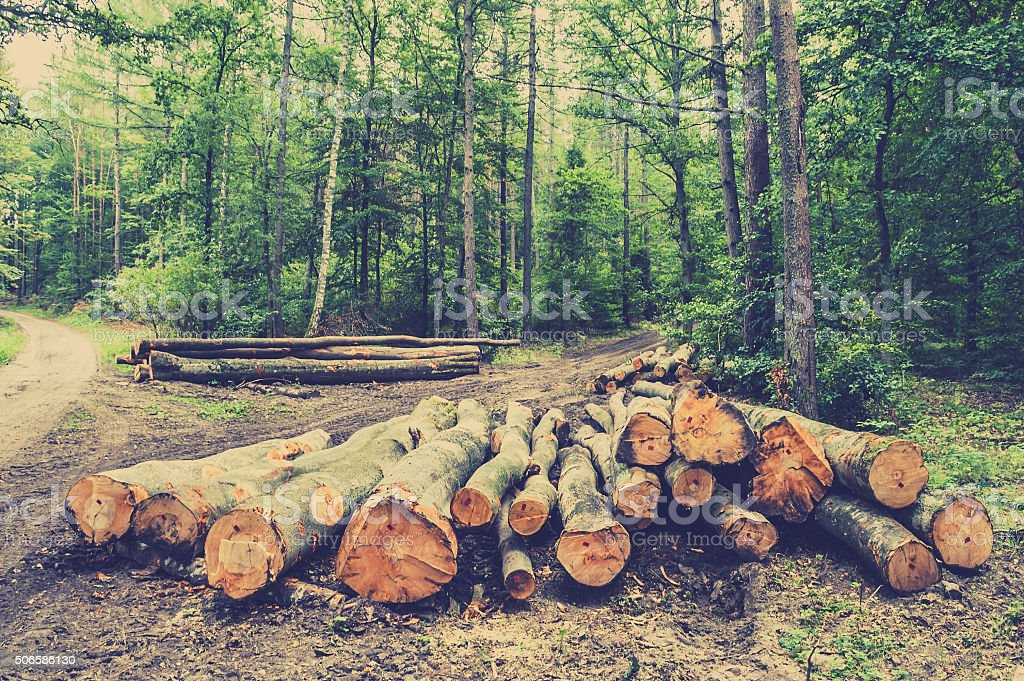 Pile of wood in the forest by the road. stock photo