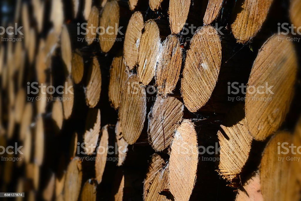 Pile of wood logs in the sunset stock photo