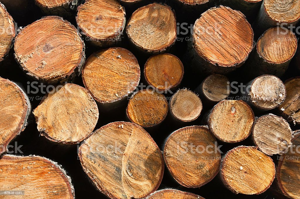 Pile of wooden logs freshly cut trees in the forest stock photo