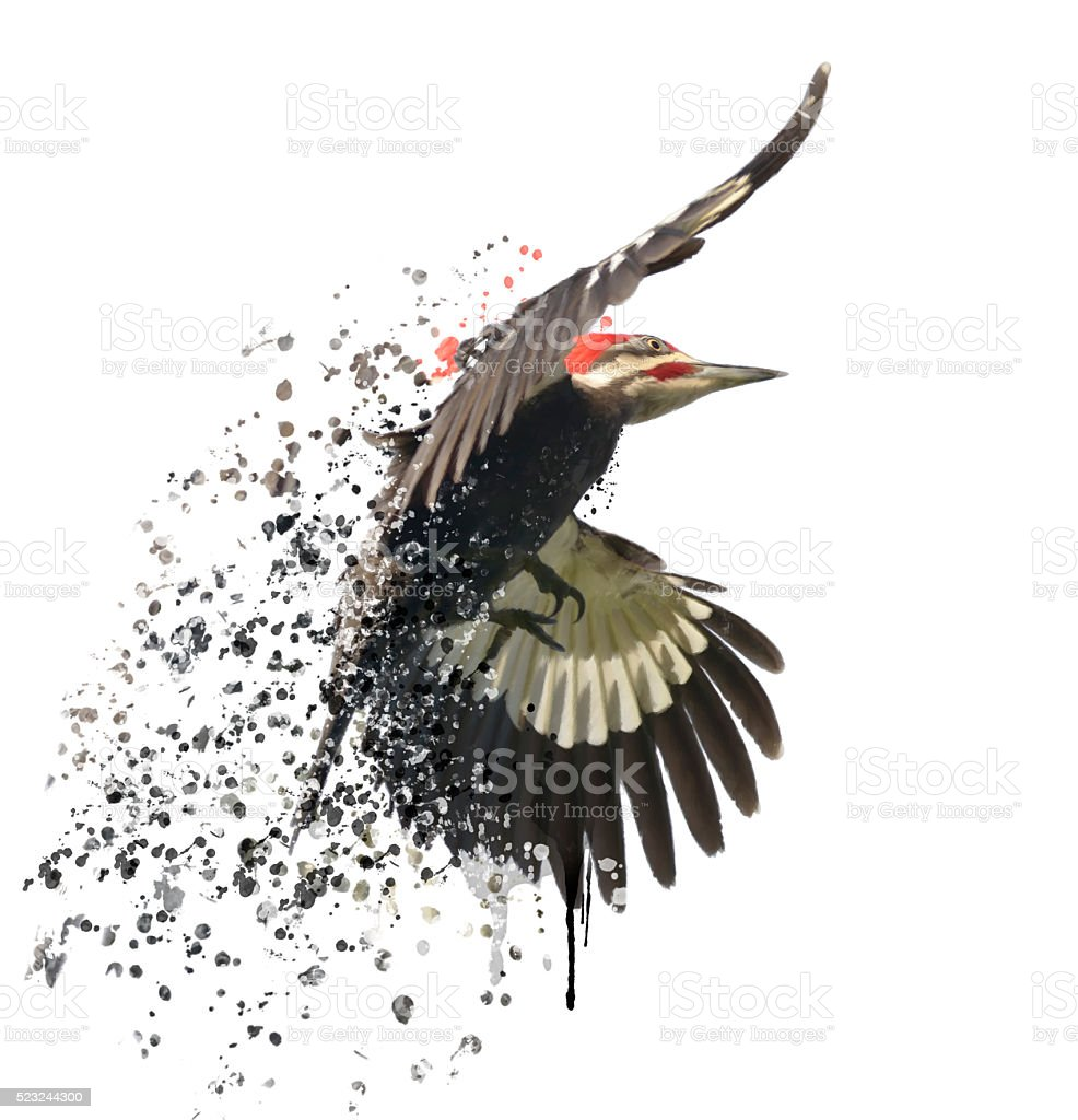 Pileated Woodpecker Watercolor stock photo