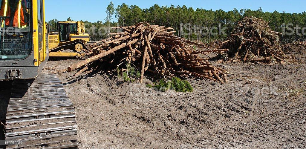 Piled Pine Trees royalty-free stock photo