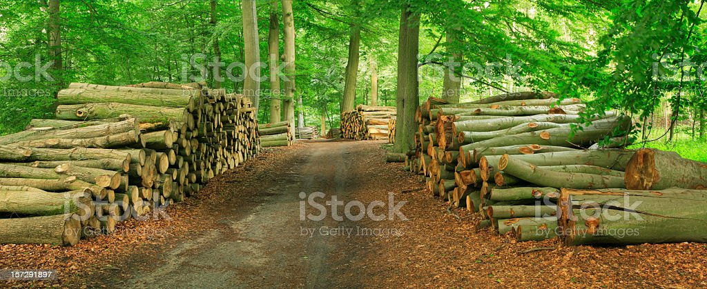 Piles of Lumber along Forest Road royalty-free stock photo