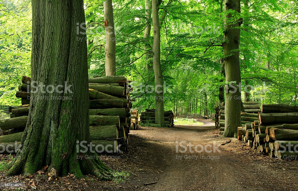 Piles of Lumber along Forest Road stock photo