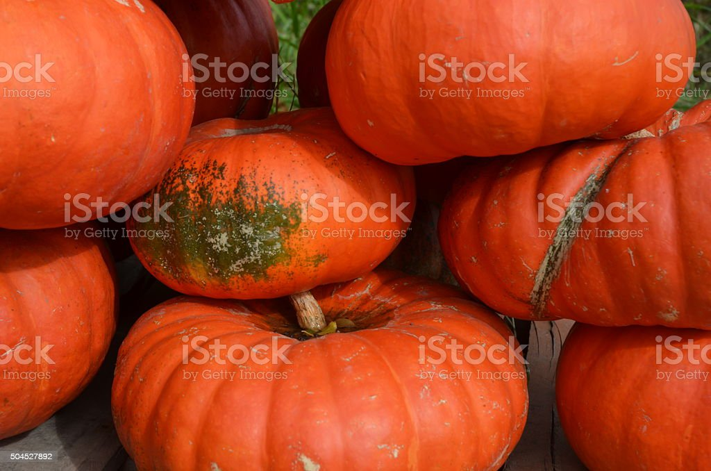 Piles of Pumpkins for Sale at a Roadside Produce Stand. royalty-free stock photo
