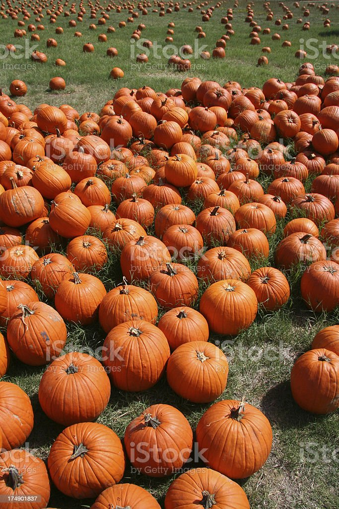 Piles of Pumpkins royalty-free stock photo