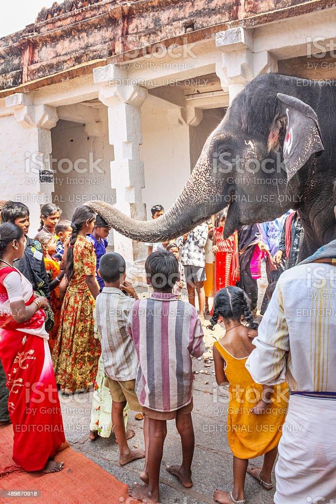 Pilgrims blessed by Lakshmi temple elephant Virupaksha Temple Hampi India stock photo