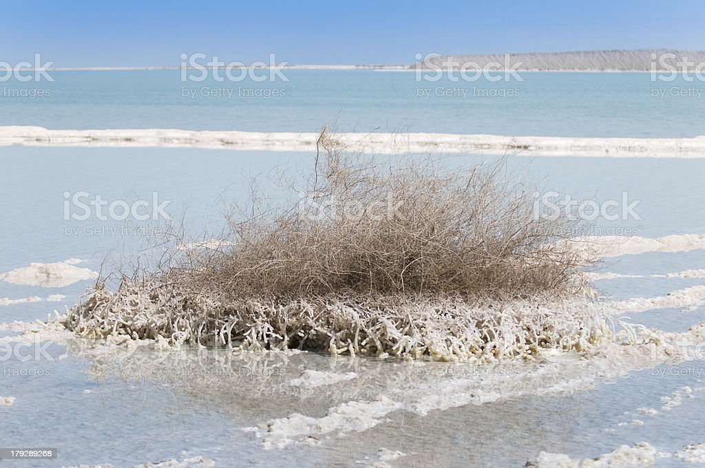 Pillar of Salt at the Dead sea, Israel royalty-free stock photo